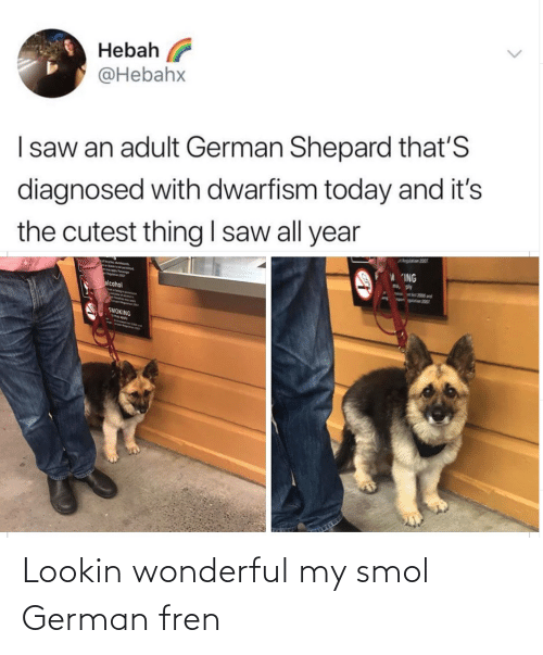 Lookin: Lookin wonderful my smol German fren