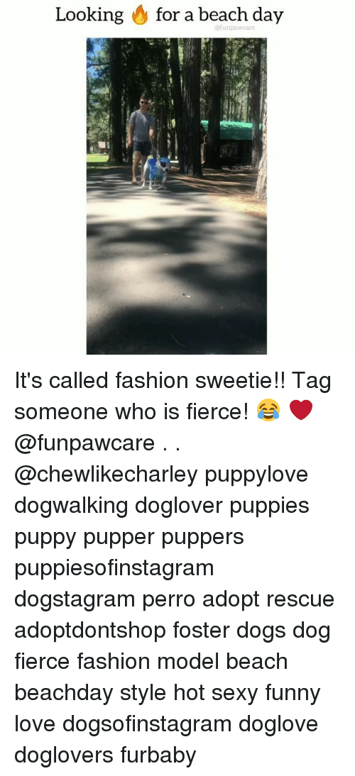 Tag Someone Who Is: Looking & for a beach day  @funpawcare It's called fashion sweetie!! Tag someone who is fierce! 😂 ❤️ @funpawcare . . @chewlikecharley puppylove dogwalking doglover puppies puppy pupper puppers puppiesofinstagram dogstagram perro adopt rescue adoptdontshop foster dogs dog fierce fashion model beach beachday style hot sexy funny love dogsofinstagram doglove doglovers furbaby