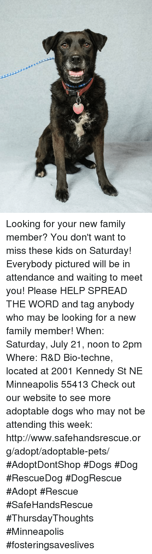 Dogs, Family, and Memes: Looking for your new family member? You don't want to miss these kids on Saturday! Everybody pictured will be in attendance and waiting to meet you! Please HELP SPREAD THE WORD and tag anybody who may be looking for a new family member!  When: Saturday, July 21, noon to 2pm  Where: R&D Bio-techne, located at 2001 Kennedy St NE Minneapolis 55413   Check out our website to see more adoptable dogs who may not be attending this week: http://www.safehandsrescue.org/adopt/adoptable-pets/  #AdoptDontShop #Dogs #Dog #RescueDog #DogRescue #Adopt #Rescue #SafeHandsRescue #ThursdayThoughts  #Minneapolis #fosteringsaveslives