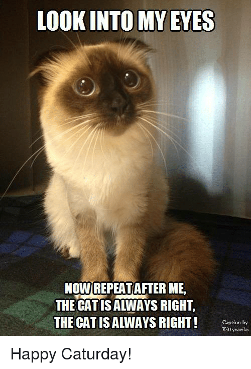 Caturday, Memes, and Captioned: LOOKINTO MY EYES  NOWIREPEAT AFTER ME  THE CAT ISALWAYS RIGHT,  THE CAT IS ALWAYS RIGHT!  Caption by  Kitty works Happy Caturday!