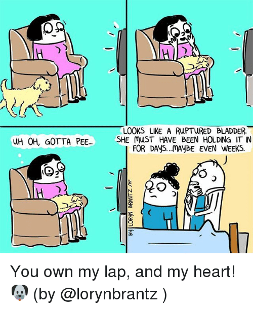 Memes, Heart, and Hearts: LOOKS LIKE A RUPTURED BLADDER.  UH 0H, GOTTA PEE...  SHE MUST HAVE BEEN HOLDING IT IN  FOR DAys..MAYBE EVEN WEEKS. You own my lap, and my heart!🐶 (by @lorynbrantz )