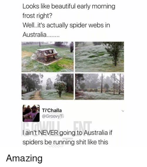 Beautiful, Memes, and Shit: Looks like beautiful early morning  frost right?  Well.it's actually spider webs in  Australia  Tİ'Challa  @GroovyTi  ain't NEVER going to Australia if  spiders be running shit like this Amazing