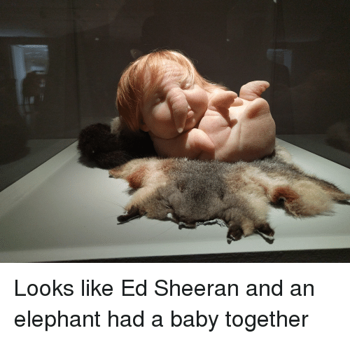 looks like ed sheeran and an elephant had a baby 3149159 looks like ed sheeran and an elephant had a baby together baby