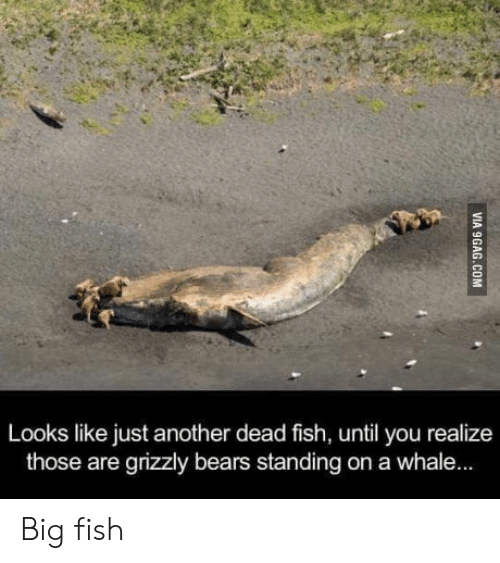 Big Fish: Looks like just another dead fish, until you realize  those are grizzly bears standing on a whale... Big fish