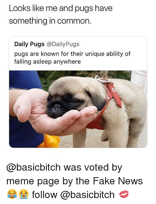 Fake, Funny, and Meme: Looks like me and pugs have  something in common.  Daily Pugs @DailyPugs  pugs are known for their unique ability of  falling asleep anywhere @basicbitch was voted by meme page by the Fake News😂😭 follow @basicbitch 💋