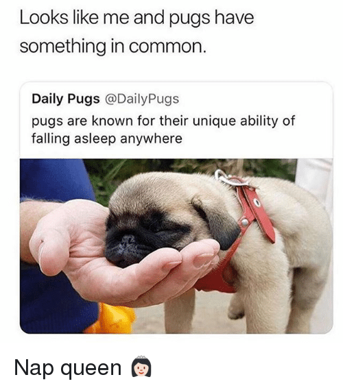 Queen, Common, and Pugs: Looks like me and pugs have  something in common.  Daily Pugs @DailyPugs  pugs are known for their unique ability of  falling asleep anywhere Nap queen 👸🏻