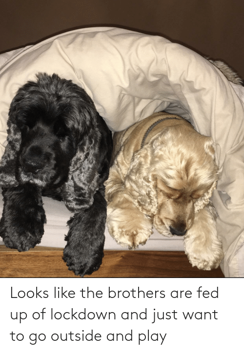 fed up: Looks like the brothers are fed up of lockdown and just want to go outside and play