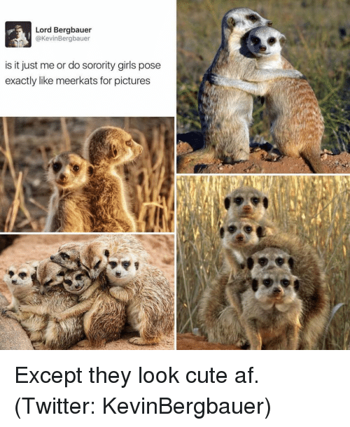 Girl Posing: Lord Bergbauer  @Kevin Bergbauer  is it just me or do sorority girls pose  exactly like meerkats for pictures Except they look cute af. (Twitter: KevinBergbauer)
