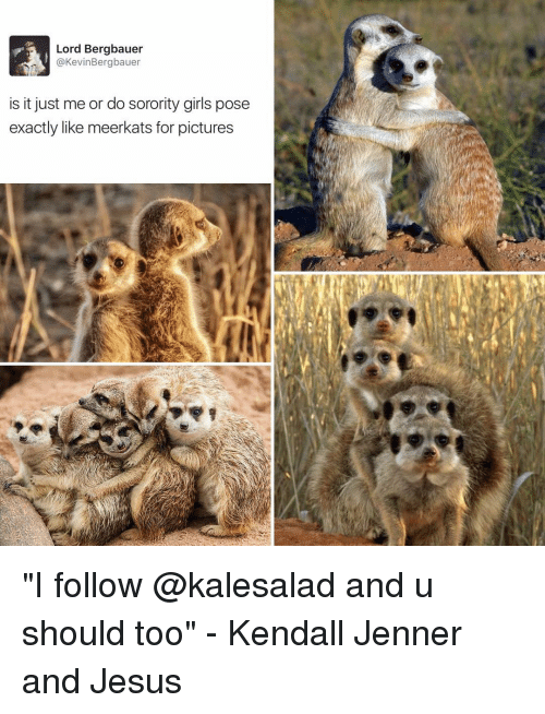 """Girl Posing: Lord Bergbauer  @Kevin Bergbauer  is it just me or do sorority girls pose  exactly like meerkats for pictures """"I follow @kalesalad and u should too"""" - Kendall Jenner and Jesus"""