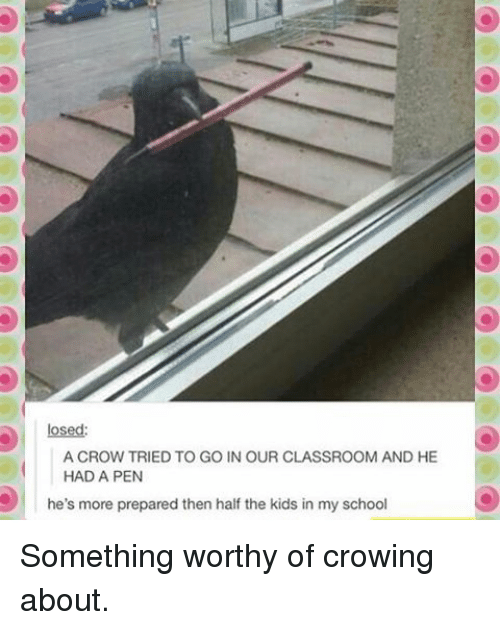 Memes, School, and Classroom: losed:  A CROW TRIED TO GO IN OUR CLASSROOM AND HE  HAD A PEN  he's more prepared then half the kids in my school Something worthy of crowing about.