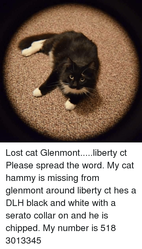 serato: Lost cat Glenmont.....liberty ct  Please spread the word.  My cat hammy is missing from glenmont around liberty ct hes a DLH black and white with a serato collar on  and he is chipped. My number is 518 3013345