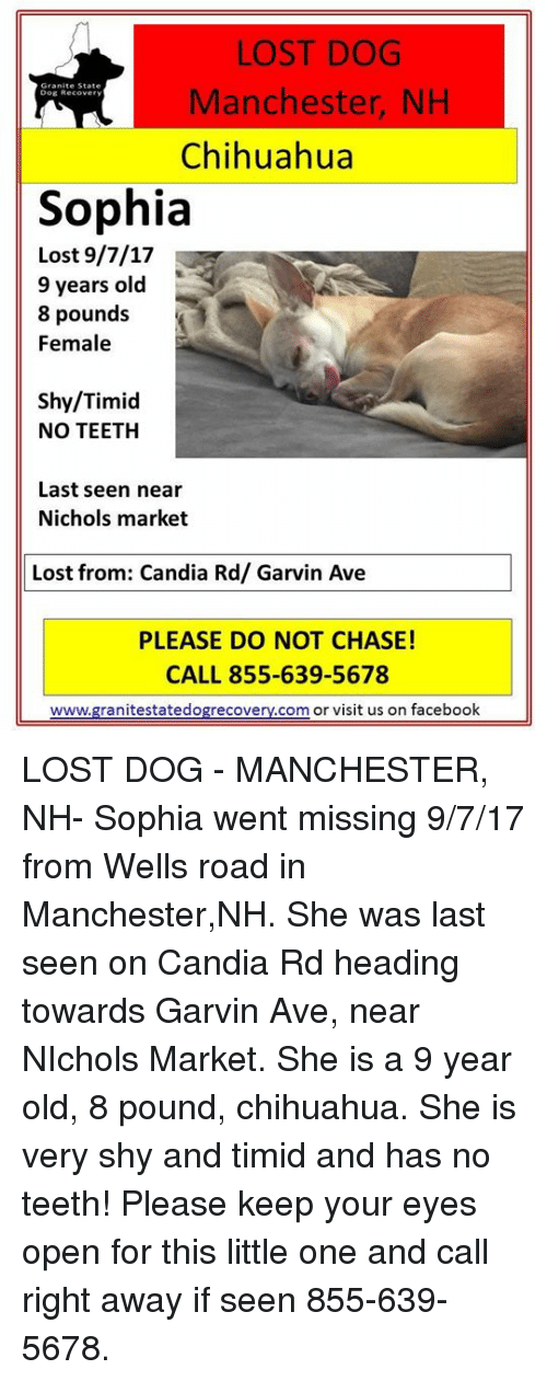 Chihuahua, Facebook, and Memes: LOST DOG  Manchester, NH  Chihuahua  Dog Recover  Sophia  Lost 9/7/17  9 years old  8 pounds  Female  Shy/Timid  NO TEETH  Last seen near  Nichols market  Lost from: Candia Rd/ Garvin Ave  PLEASE DO NOT CHASE!  CALL 855-639-5678  www.granitestatedogrecovery.com or visit us on facebook LOST DOG - MANCHESTER, NH-  Sophia went missing 9/7/17 from Wells road in Manchester,NH.  She was last seen on Candia Rd heading towards Garvin Ave, near NIchols Market.  She is a 9 year old, 8 pound, chihuahua.  She is very shy and timid and has no teeth!  Please keep your eyes open for this little one and call right away if seen  855-639-5678.