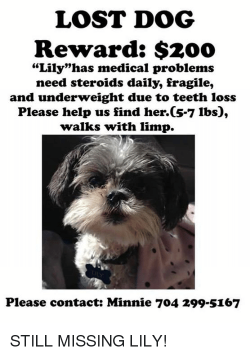 "Bailey Jay, Memes, and Lost: LOST DOG  Reward: $200  ""Lily""has medical problems  need steroids daily, fragile,  and underweight due to teeth loss  Please help us find her. 5-7 lbs  walks with limp.  Please contact: Minnie 704 299 5167 STILL MISSING LILY!"