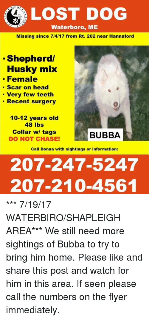 Bubba, Head, and Memes: LOST DOG  Waterboro, ME  Missing since 7/4/17 from Rt. 202 near Hannaford  .Shepherd/  Husky mix  Female  . Scar on head  Very few teeth  . Recent surgery  10-12 years old  48 lbs  Collar w/ tags  DO NOT CHASE!  BUBBA  Call Donna with sightings or information:  207-247-5247  207-210-4561 *** 7/19/17 WATERBIRO/SHAPLEIGH AREA***  We still need more sightings of Bubba to try to bring him home. Please like and share this post and watch for him in this area. If seen please call the numbers on the flyer immediately.