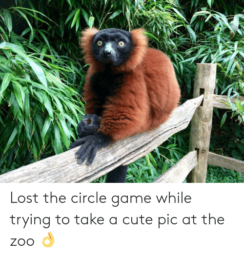 The Circle Game: Lost the circle game while trying to take a cute pic at the zoo 👌