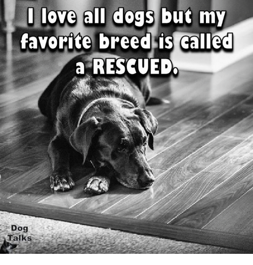 Memes, 🤖, and All Dogs: love all dogs but my  favorite breed is called  a RESCUE DO  Dog