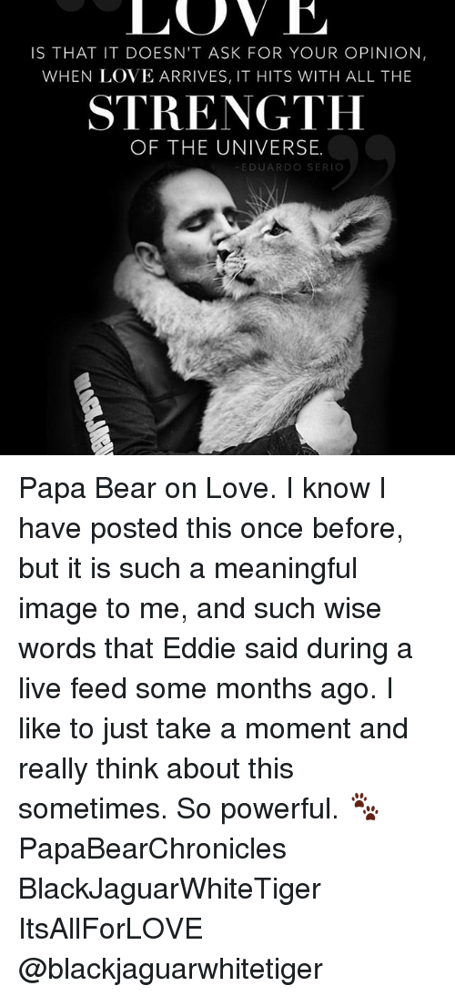 papa bear: LOVE  IS THAT IT DOESN'T ASK FOR YOUR OPINION,  WHEN LOVE ARRIVES, IT HITS WITH ALL THE  STRENGTH  OF THE UNIVERSE.  EDUARDO SER Papa Bear on Love. I know I have posted this once before, but it is such a meaningful image to me, and such wise words that Eddie said during a live feed some months ago. I like to just take a moment and really think about this sometimes. So powerful. 🐾 PapaBearChronicles BlackJaguarWhiteTiger ItsAllForLOVE @blackjaguarwhitetiger