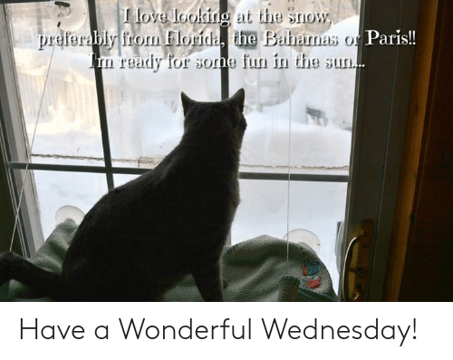 Have A Wonderful Wednesday: love loolingat the snow  bly from Florida, the Baharnas o Paris!!  ready for sone fun in the sun. Have a Wonderful Wednesday!