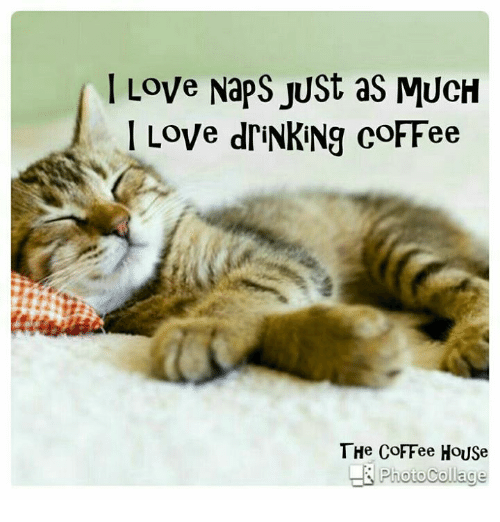 I Just Love This House: 25+ Best Memes About Coffee House