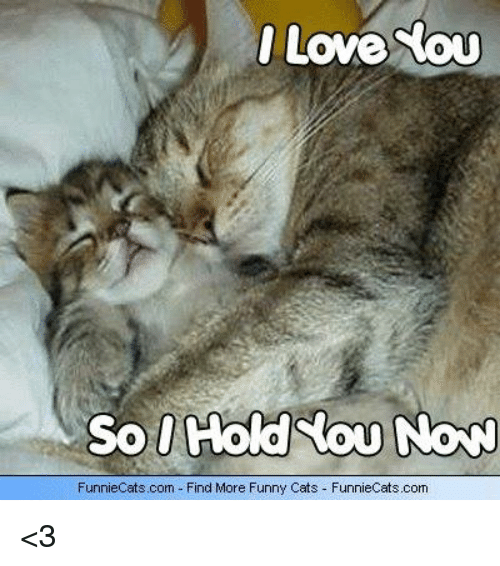 Funny I Love You More: 25+ Best Memes About Funny Cats