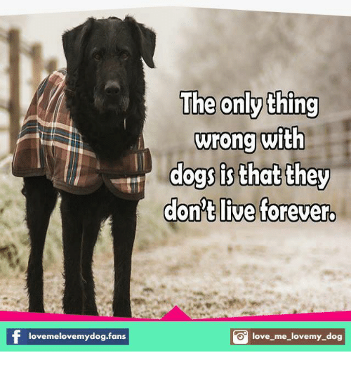 love my dogs: lovemelovemydog.fans  The only thing  wrong with  dogs is that they  don't live forever  O love me love my dog