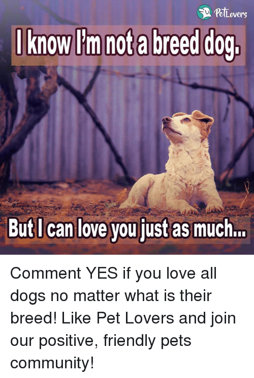 Memes, 🤖, and Pet: Lovers  I know I'm nota breed dog,  But I can love you just as much... Comment YES if you love all dogs no matter what is their breed!  Like Pet Lovers and join our positive, friendly pets community!