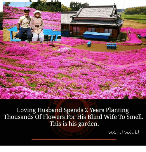 Love Husband: Loving Husband Spends 2 Years Planting  Thousands of Flowers For His Blind Wife To Smell.  This is his garden.  Weird World