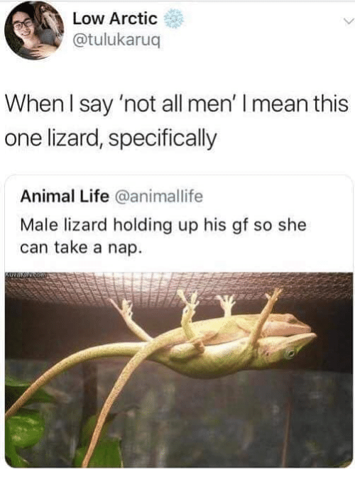 Life, Animal, and Mean: Low Arctic  @tulukaruq  When l say 'not all men' I mean this  one lizard, specifically  Animal Life @animallife  Male lizard holding up his gf so she  can take a nap.