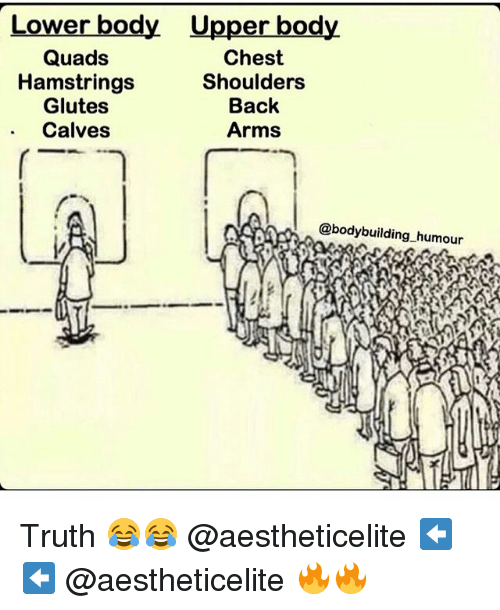 Gym, Bodybuilding, and Truth: Lower body Upper body.  Quads  Chest  Hamstrings  Shoulders  Glutes  Back  Calves  Arms  @bodybuilding humour Truth 😂😂 @aestheticelite ⬅️⬅️ @aestheticelite 🔥🔥