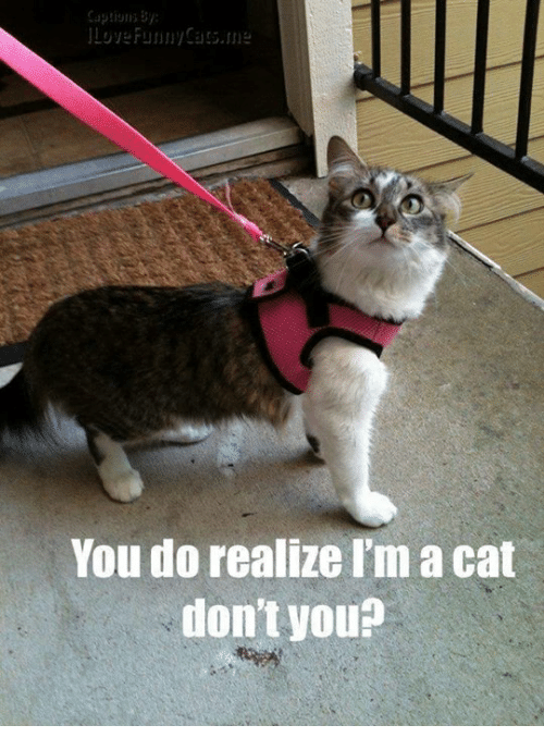Cats, Funny, and Grumpy Cat: Loy Funny Cats, ne  You do realize I'm acat  don't you?