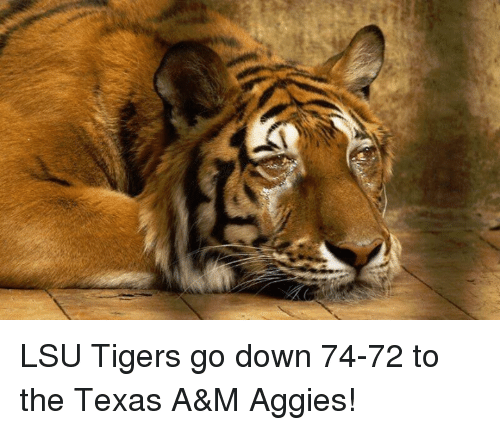 lsu tigers: LSU Tigers go down 74-72 to the Texas A&M Aggies!