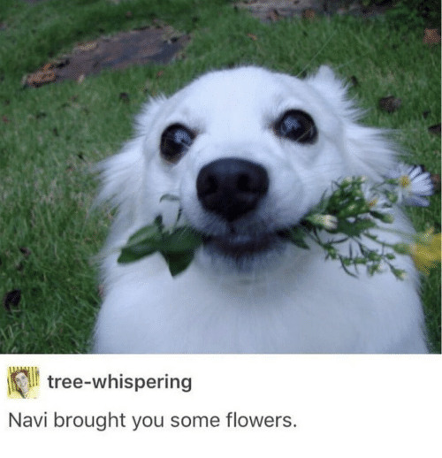 Flowers, Tree, and Navi: lt tree-whispering  Navi brought you some flowers.