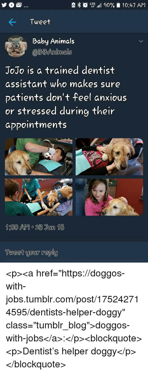 """Baby Animals: LTE.al 90%  10:47 AM  Tweet  Baby Animals  @RBAnimals  JoJo is a trained dentist  assistant who makes sure  patients don't feel anxious  or stressed during their  aקקointments  Tueet your reply <p><a href=""""https://doggos-with-jobs.tumblr.com/post/175242714595/dentists-helper-doggy"""" class=""""tumblr_blog"""">doggos-with-jobs</a>:</p><blockquote><p>Dentist's helper doggy</p></blockquote>"""