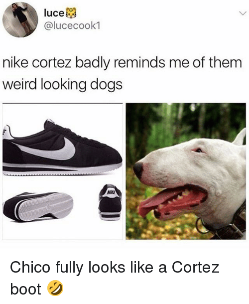 Dogs, Nike, and Weird: luce  @lucecook1  nike cortez badly reminds me of them  weird looking dogs  IKE Chico fully looks like a Cortez boot 🤣