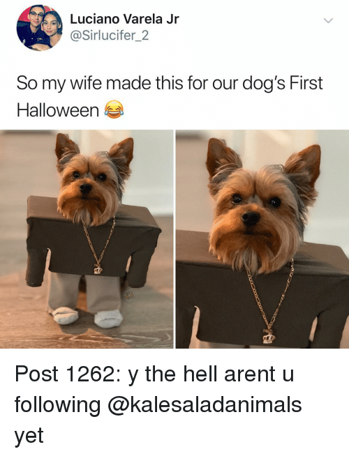 Dogs, Halloween, and Memes: Luciano Varela Jr  @Sirlucifer_2  So my wife made this for our dog's First  Halloween Post 1262: y the hell arent u following @kalesaladanimals yet