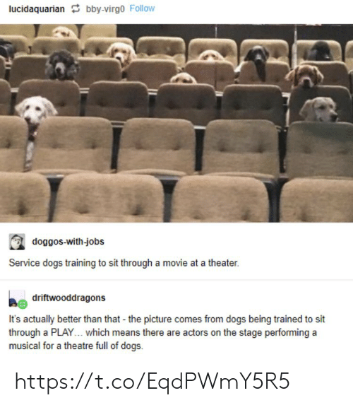 actors: lucidaquarian bby-virgo Follow  doggos-with-jobs  Service dogs training to sit through a movie at a theater.  driftwooddragons  It's actually better than that - the picture comes from dogs being trained to sit  through a PLAY... which means there are actors on the stage performing a  musical for a theatre full of dogs https://t.co/EqdPWmY5R5