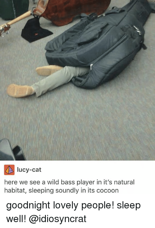 Memes, Lucy, and Wild: lucy-cat  here we see a wild bass player in it's natural  habitat, sleeping soundly in its cocoon goodnight lovely people! sleep well! @idiosyncrat