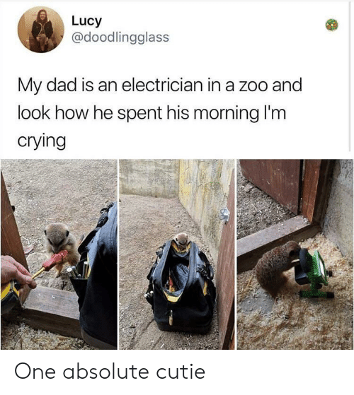 Electrician: Lucy  @doodlingglass  My dad is an electrician in a zoo and  look how he spent his morning I'm  crying One absolute cutie