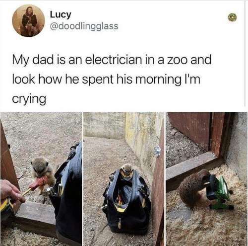 Electrician: Lucy  @doodlingglass  My dad is an electrician in a zoo and  look how he spent his morning I'm  crying