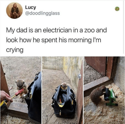 Electrician: Lucy  @doodlingglass  My dad is an electrician in a zoo and  look how he spent his morning l'm  crying