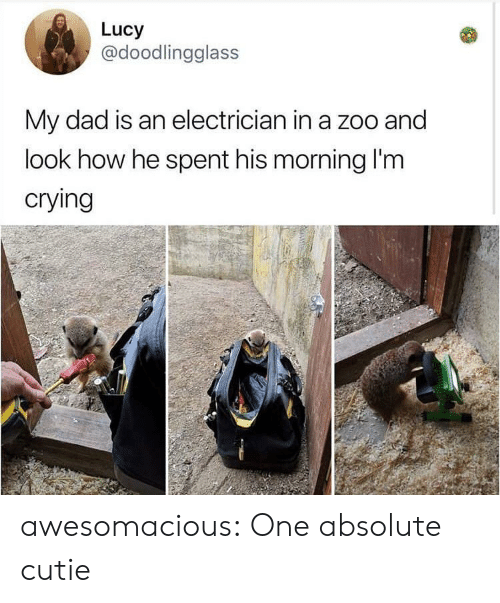 Electrician: Lucy  @doodlingglass  My dad is an electrician in a zoo and  look how he spent his morning I'm  crying awesomacious:  One absolute cutie