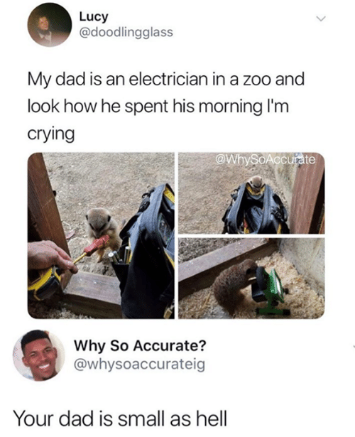 Electrician: Lucy  @doodlingglass  My dad is an electrician in a zoo and  look how he spent his morning I'm  crying  @WbySoAccurate  Why So Accurate?  @whysoaccurateig  Your dad is small as hell