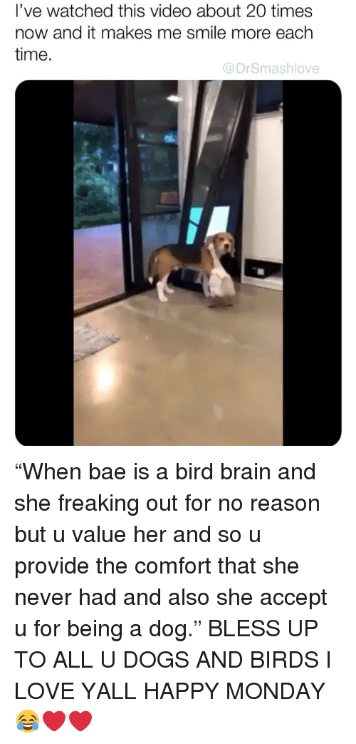 """freaking out: l've watched this video about 20 times  now and it makes me smile more each  time.  @DrSmashlove """"When bae is a bird brain and she freaking out for no reason but u value her and so u provide the comfort that she never had and also she accept u for being a dog."""" BLESS UP TO ALL U DOGS AND BIRDS I LOVE YALL HAPPY MONDAY 😂❤️❤️"""