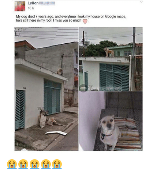 i miss you so much: Lyllon  18 h  My dog died 7 years ago, and everytime i look my house on Google maps,  he's still there in my roof. I miss you so much 😭😭😭😭😭