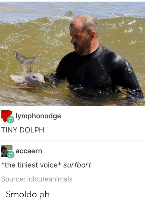 Dolph: lymphonodge  TINY DOLPH  accaern  *the tiniest voice* surfbort  Source: lolcuteanimals Smoldolph