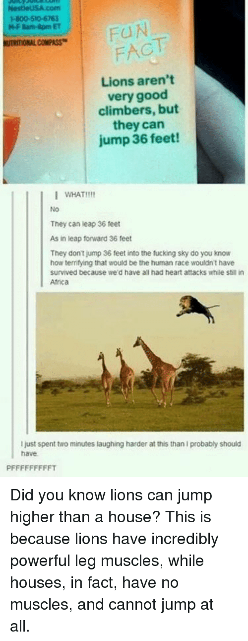 Africa, Dank, and Fucking: M-F 8am-8pm ET  NUTRITIONAL COMPASS  FACT  Lions arent  very good  climbers, but  they can  jump 36 feet!  Lions aren't  I WHAT!!!!  No  They can leap 36 feet  As in leap forward 36 feet  They dont jump 36 feet into the fucking sky do you know  how terrifying that would be the human race wouldn't have  survived because we'd have all had heart attacks while sbill in  Africa  I just spent two minutes laughing harder at this than I probably should  have Did you know lions can jump higher than a house? This is because lions have incredibly powerful leg muscles, while houses, in fact, have no muscles, and cannot jump at all.