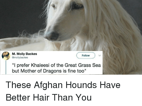 """Backes: M. Molly Backes  @mollybackes  Follow  """"I prefer Khaleesi of the Great Grass Sea  but Mother of Dragons is fine too"""" <p>These Afghan Hounds Have Better Hair Than You</p>"""