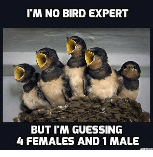Guess: M NO BIRD EXPERT  BUT IM GUESSING  4 FEMALES AND 1 MALE  ADOTETCOM