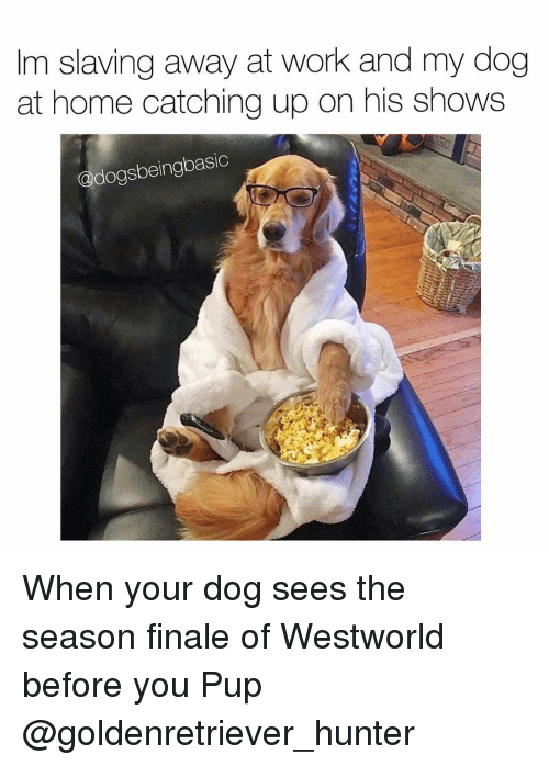 Westworld: m slaving away at work and my dog  at home catching up on his shows  dogsbeingbasic When your dog sees the season finale of Westworld before you Pup @goldenretriever_hunter
