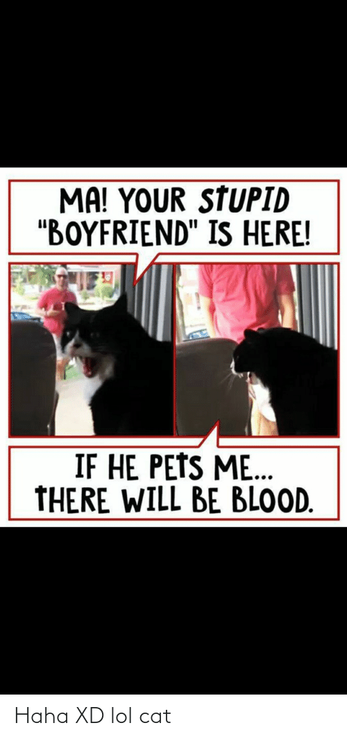 "Xd Lol: MA! YOUR STUPID  ""BOYFRIEND"" IS HERE!  IF HE PETS ME..  THERE WILL BE BLOOD. Haha XD lol cat"